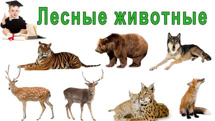 Лесные животные для детей
